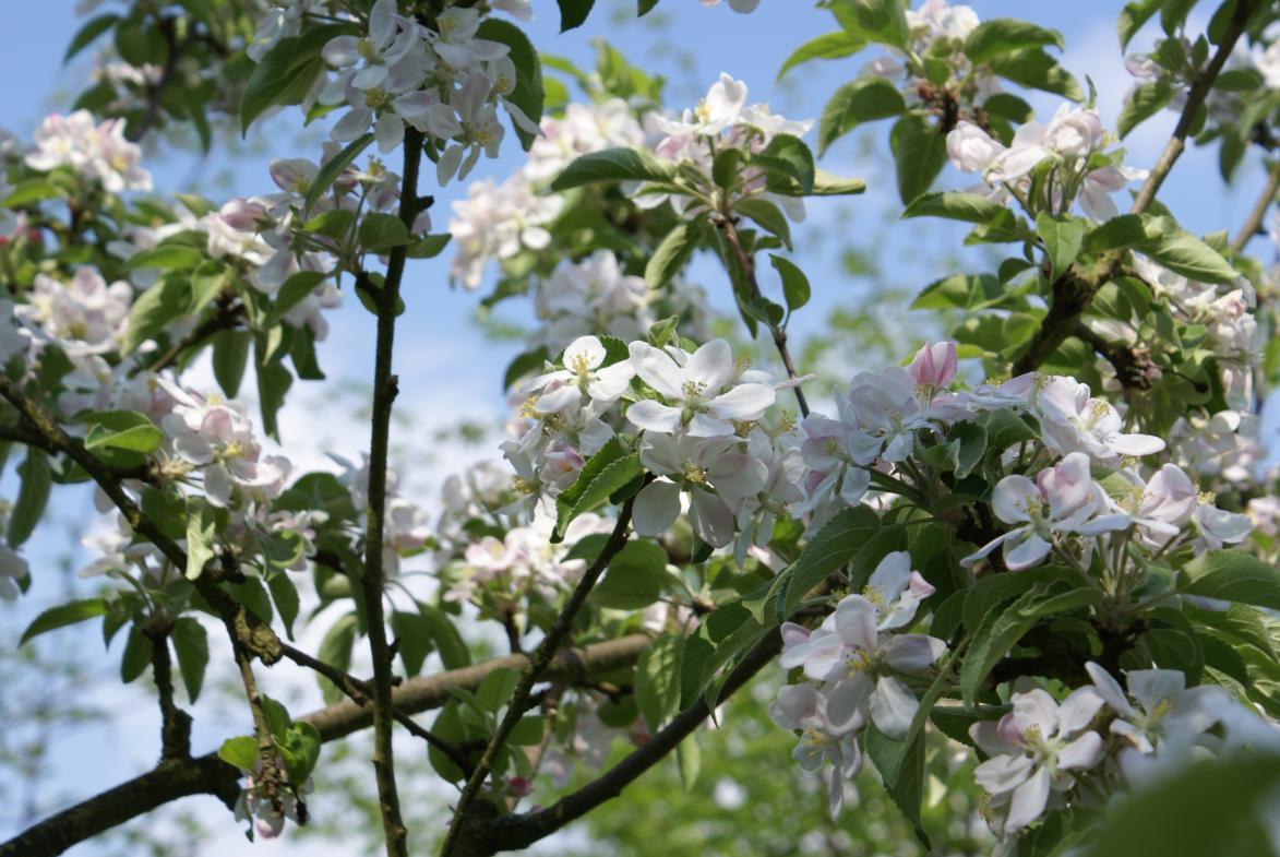 arbres-en-fleurs-automne-stavelot_1.jpg