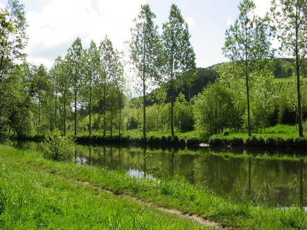 Découverte de la vallée de l'Amblève et de son cortège floral - en Fr et en NL