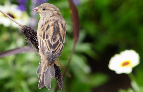 Balade ornithologique 2