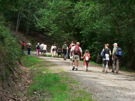 Balade nature guidée : A travers les forêts