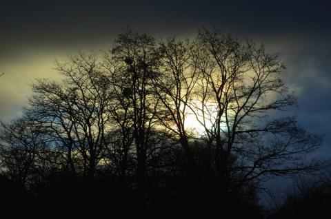 Begeleide wandeling : Wandeling bij valavond