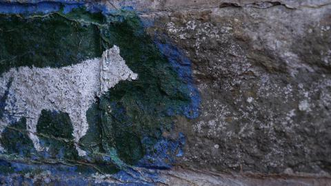 Balade nature guidée : Le loup