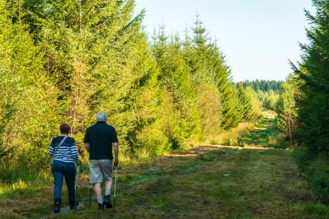 Balade nature guidée : vers le bois de Lusné et la Croix Collin