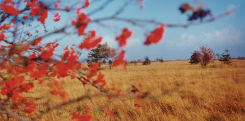 Balade nature guidée : balade du Négus