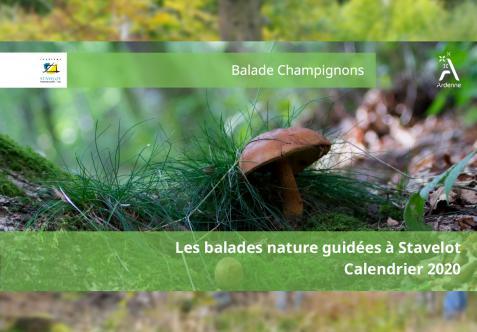 Guided Nature Walk - Balade Champignons