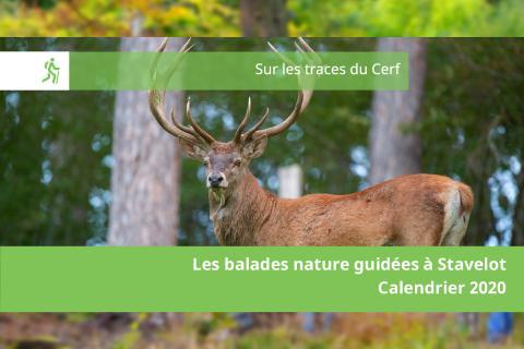 Balade Nature guidée - La balade du cerf
