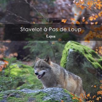Stavelot à Pas de Loup