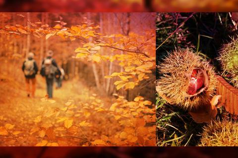 Balade Nature Guidée : En automne le long de l'Amblève