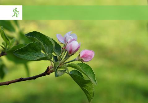 Begeleide Natuurwandeling - Lente