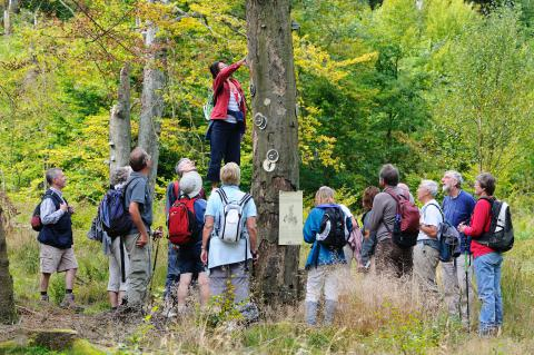 The guided nature walks