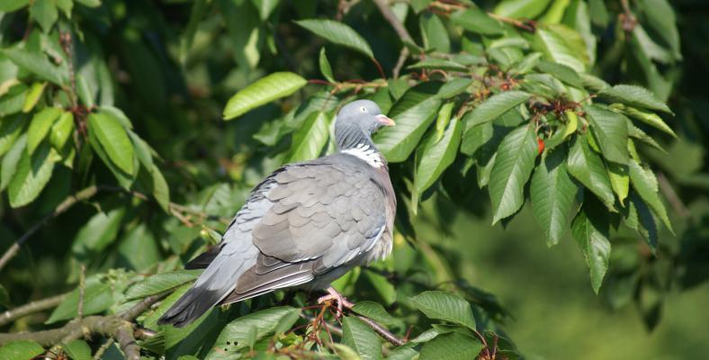 Photo oiseau - bourse aux oiseaux