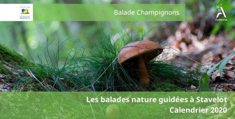 Web-champignon