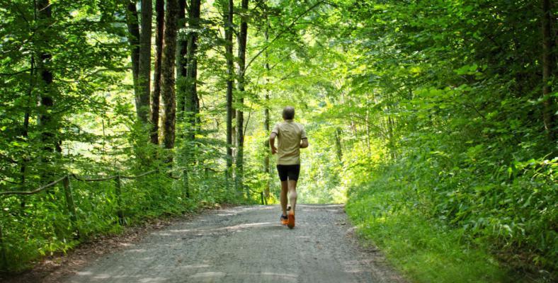 Run_jog_sport_leisure_sporty_healthy_jogging_training-538457